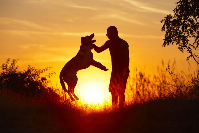 Perro - amigo hombre