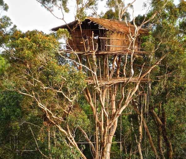 Los korowai una incre ble tribu de 39 ingenieros 39 que - Casas para arboles ...