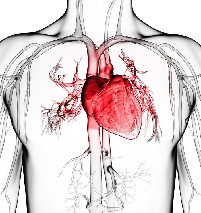 Investigadores hallan papilas gustativas en el corazón | History Channel